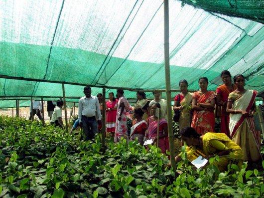 Tata Volunteering Week – Cultivation Training for 20 Women Farmers